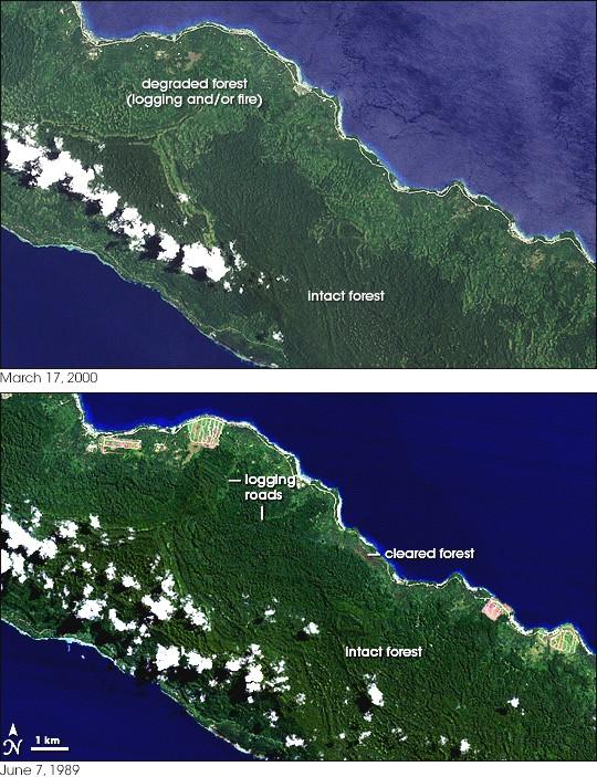 Deforestation in Papua New Guinea.