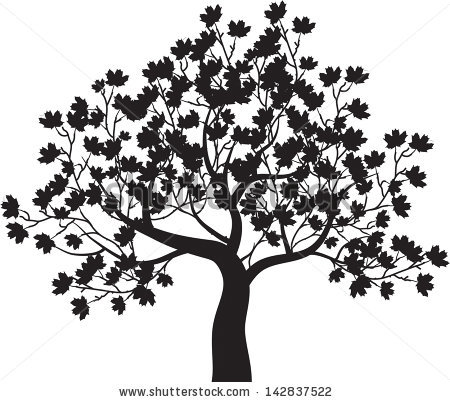Maple Tree Stock Images, Royalty.