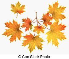 Maple branch Illustrations and Clipart. 5,946 Maple branch royalty.