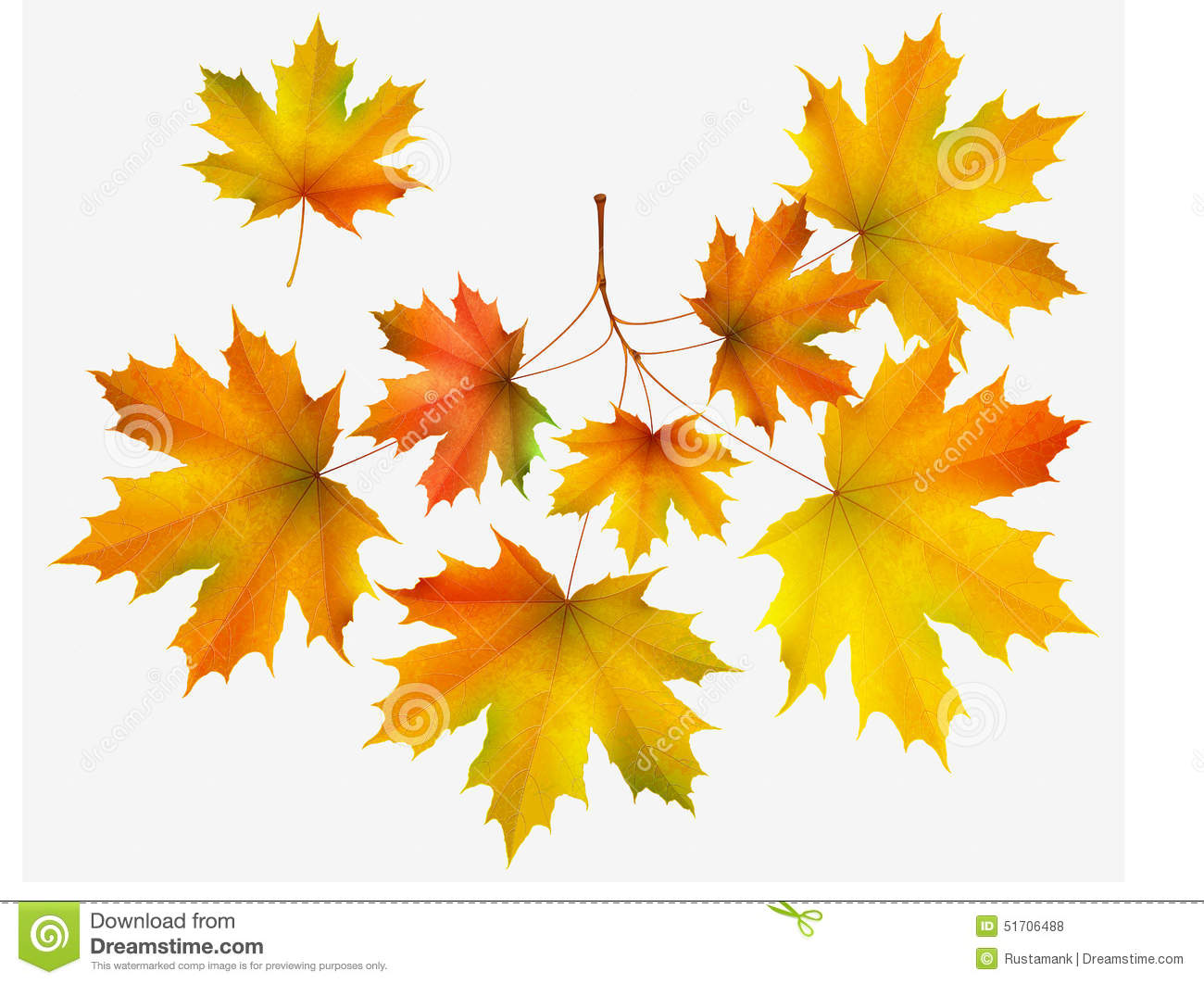 Autumn Leaf Maple And Maple Branch Stock Vector.