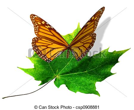 Clipart of Butterfly Lands on Maple Leaf.