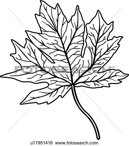 Clip Art of Maple Leaf u11951416.