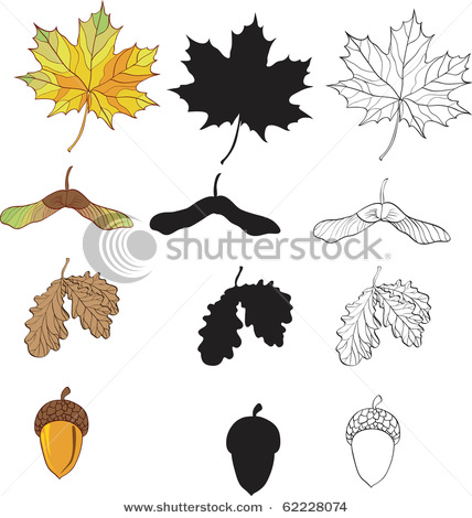 of Maple and Oak Leaves Along with Seeds and Acorns.