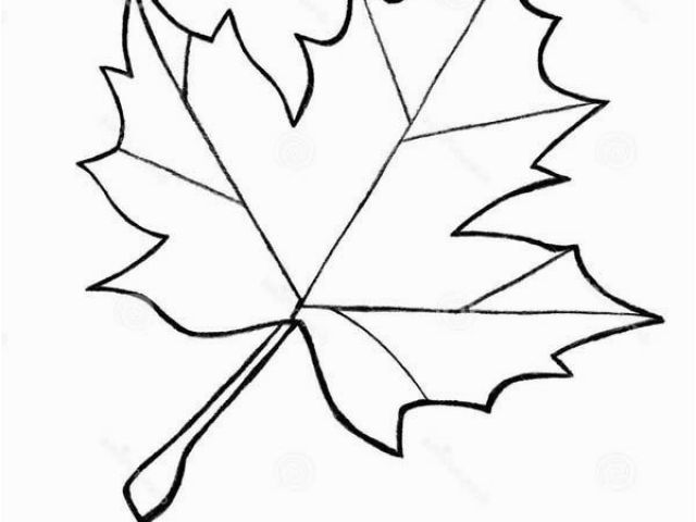Maple Syrup Drawing.