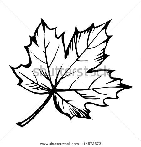 Maple Leaf Clipart Black And White Clipart Panda Free.