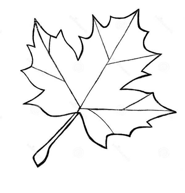 Leaf Black And White.