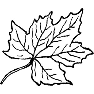 Leaves black and white maple leaf clipart black and white.
