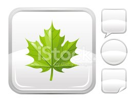 Green Maple Leaf Icon on Silver Button stock vectors.