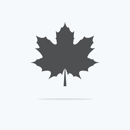 Maple Leaf. Silhouette of the maple leaf. Icon of a maple.