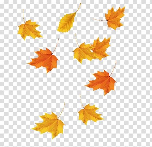 Orange maple leaves , Maple leaf Red maple Icon, Maple Leaf.