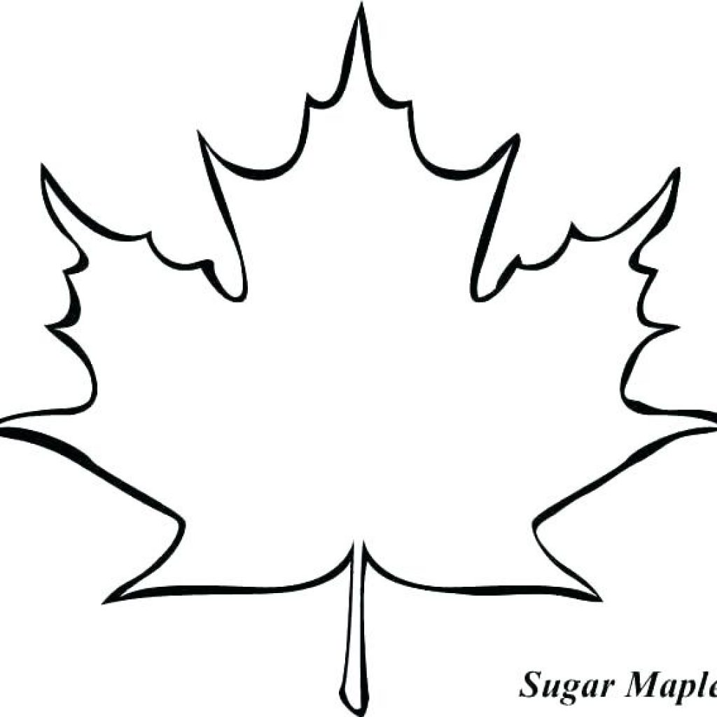 Leaf Outline Drawing.