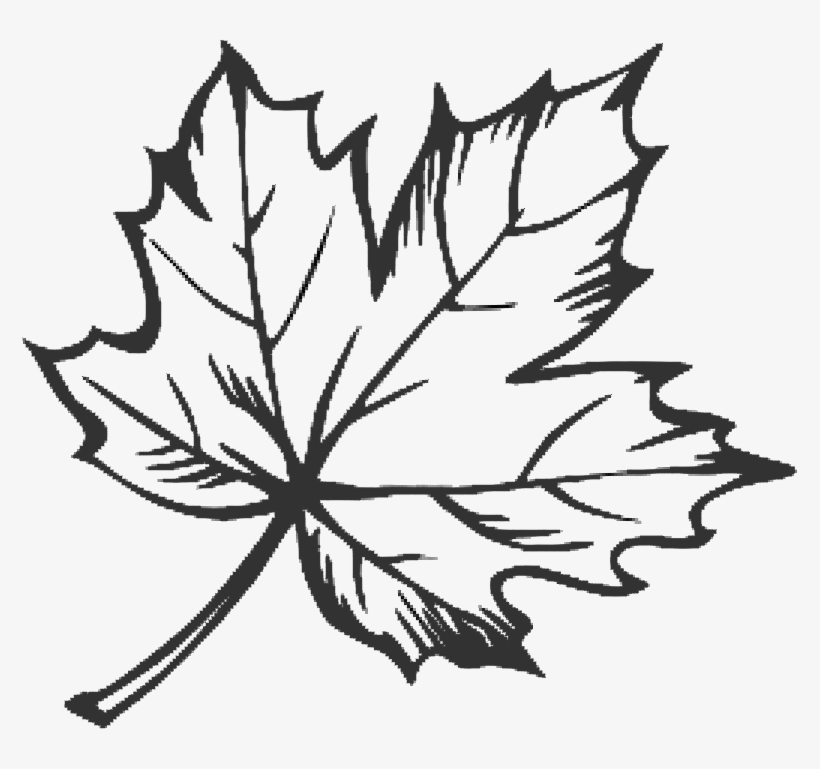 Clipart Free Maple Leaf Google Search Doodles Pinterest.