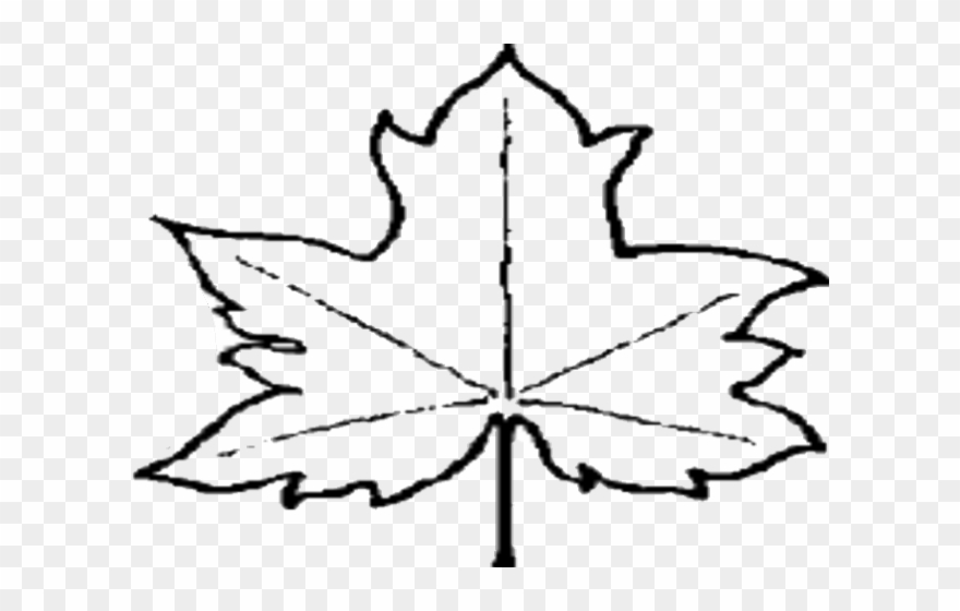 Maple Leaf Clipart Out Line.