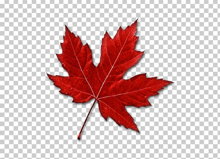 Canada Maple Leaf PNG, Clipart, Autumn Leaf Color, Canada.