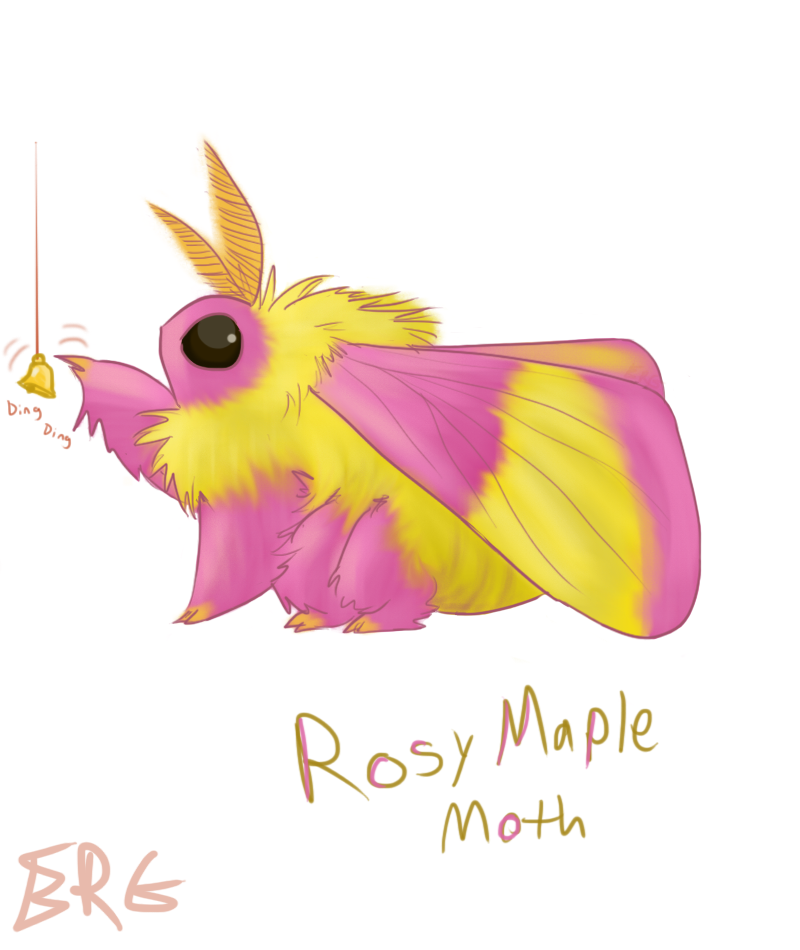 Fluffity Rosy Maple Moth — Weasyl.