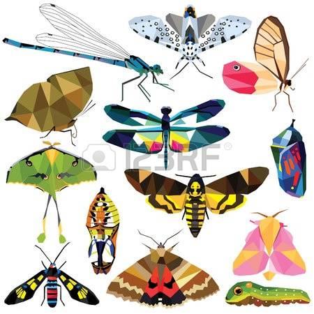 Maple Moth Stock Photos Images. Royalty Free Maple Moth Images And.