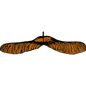 maple seed clipart, cliparts of maple seed free download (wmf, eps.