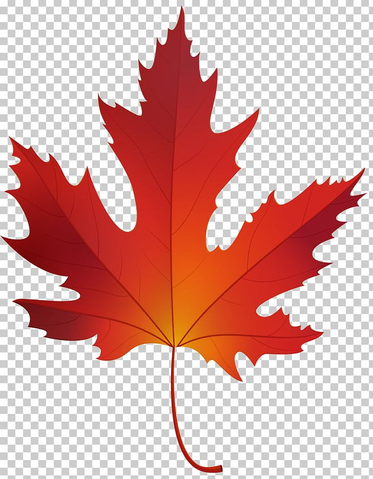 Red Maple Sugar Maple Maple Leaf PNG, Clipart, Autumn.