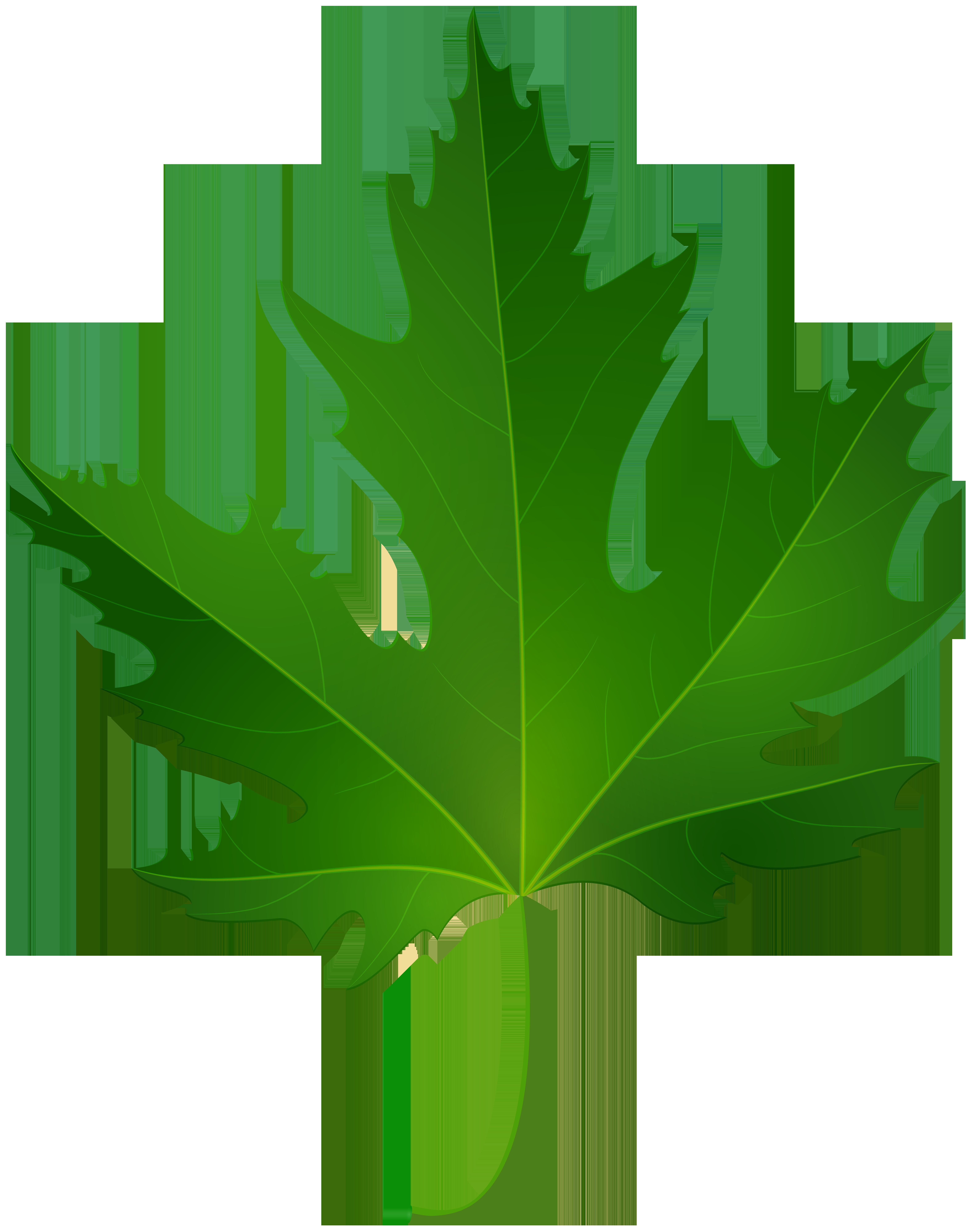 Maple Leaf PNG Clip Art.