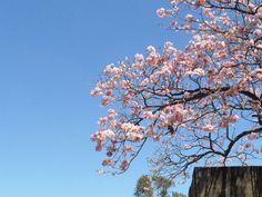 Maquilishuat flower by ~FloeSefar on deviantART.