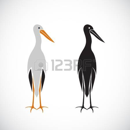 66 Marabou Stock Vector Illustration And Royalty Free Marabou Clipart.