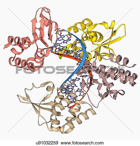 Stock Illustration of Marburg viral protein 35 and RNA u91032259.