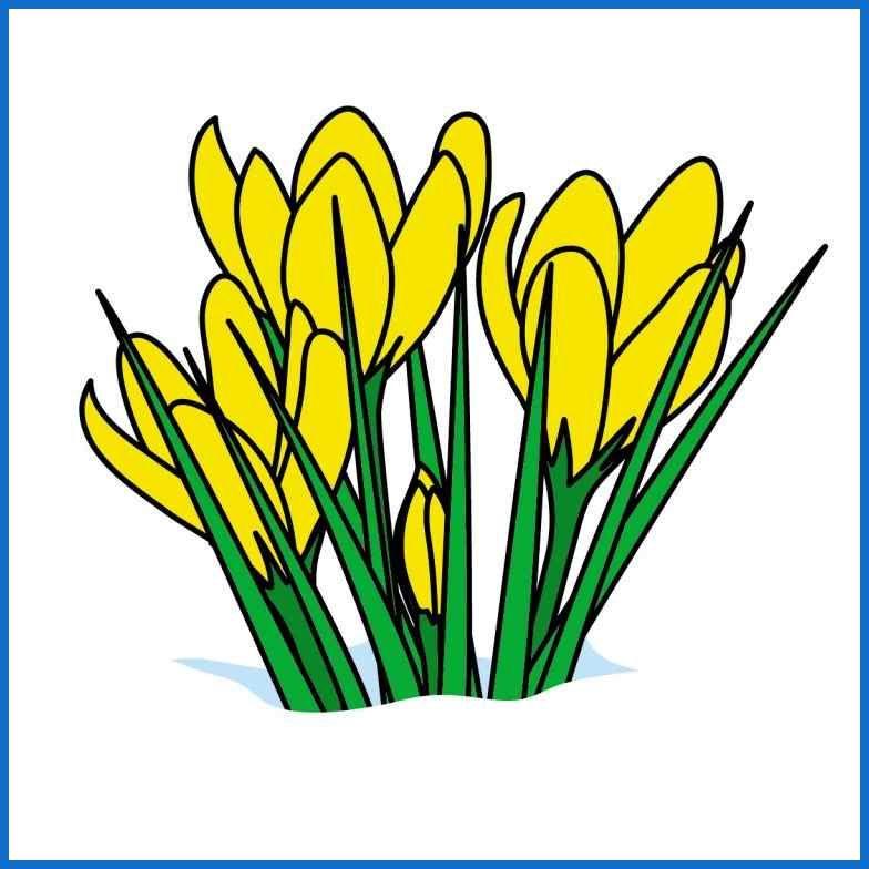 Spring clip art crocus.