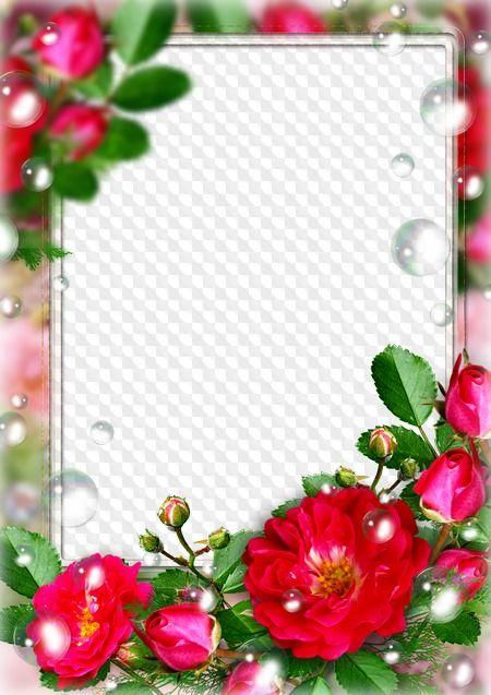 Marco de fotos Rosas rojas. Marco PNG transparente.