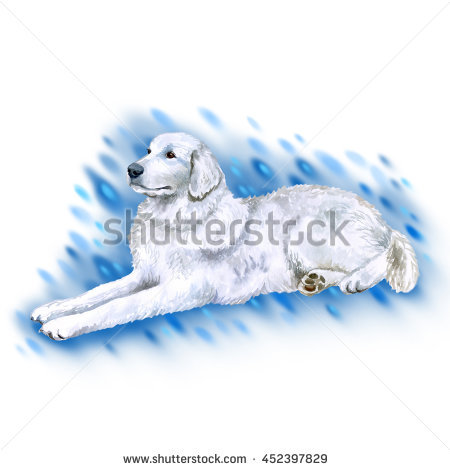 Maremma Sheepdog Stock Photos, Royalty.