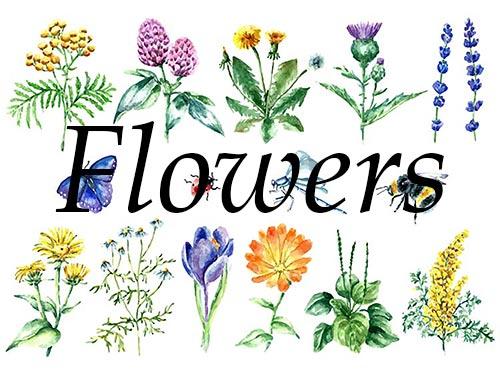 Fruits, Roots, Rhizome, Herbs, Leaves, Flowers, Seeds, Bark.
