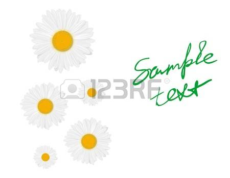1,029 Marguerite Stock Vector Illustration And Royalty Free.
