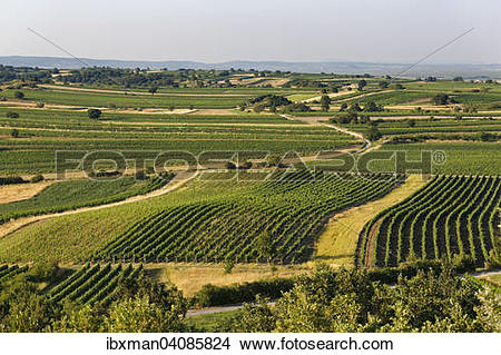 Stock Photo of Vineyards, view from Mt. Kogel, near St.