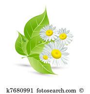 Margherite Immagini Clipart. 19.399 margherite oltre 15 Produttori.