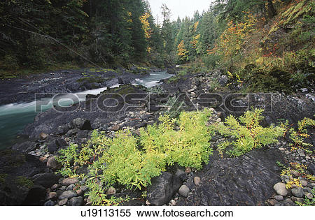 Stock Image of Cowichan River, Marie Canyon, Vancouver Island.