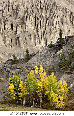 Picture of Autumn colours along the Chilcotin River canyon wall at.