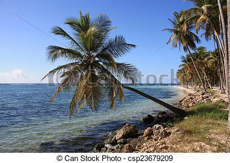 Stock Photography of Tipica palma di Marie Galante.