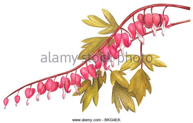 Vascular Plants Stock Photos & Vascular Plants Stock Images.