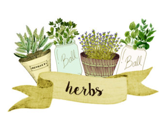 Herbs graphic.