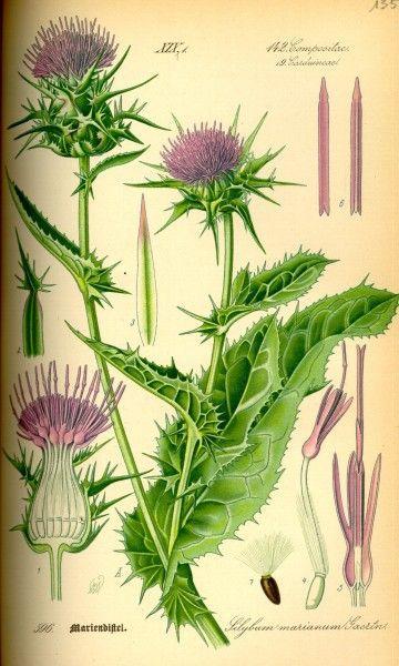 1000+ images about Botanischer Garten on Pinterest.