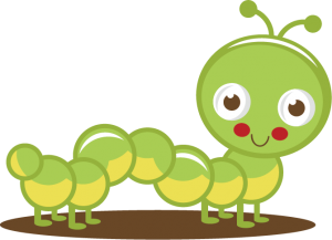 1000+ images about insecte on Pinterest.