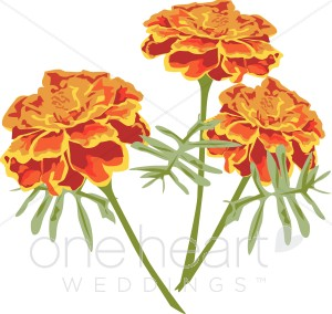 Orange Marigolds Clipart.