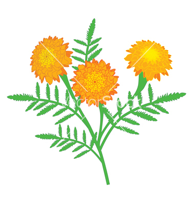 Marigold Clipart Black And White.