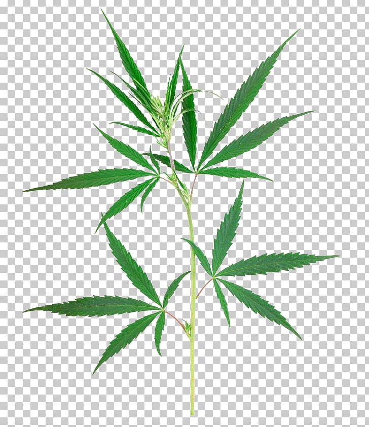 Cannabis Sativa Marijuana Plant PNG, Clipart, Cannabis.