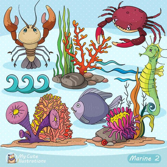 Under the Sea Clipart, Sea animal clipart, Marine creatures.