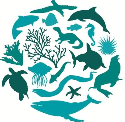 INTERNATIONAL MARINE BIODIVERSITY DAY.
