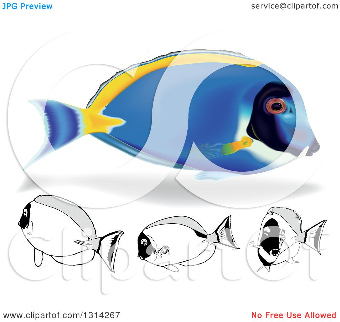 Clipart of 3d and Cartoon Powder Blue Tang Marine Fish.