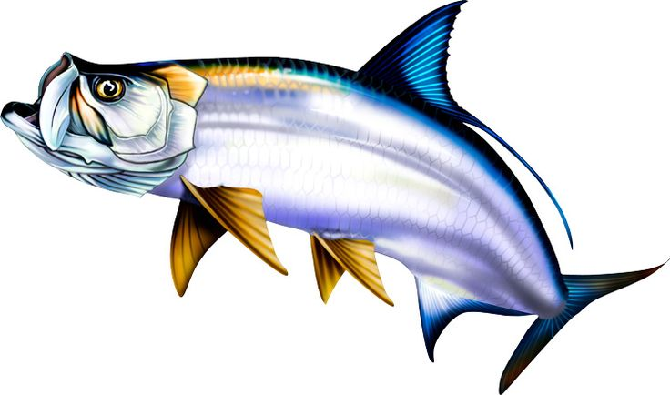 Saltwater Fish Clipart.
