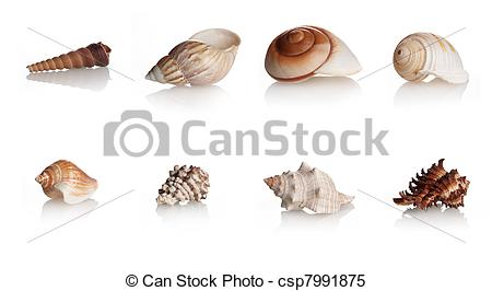 Stock Images of Collection Shells Marine Mollusks, eight different.