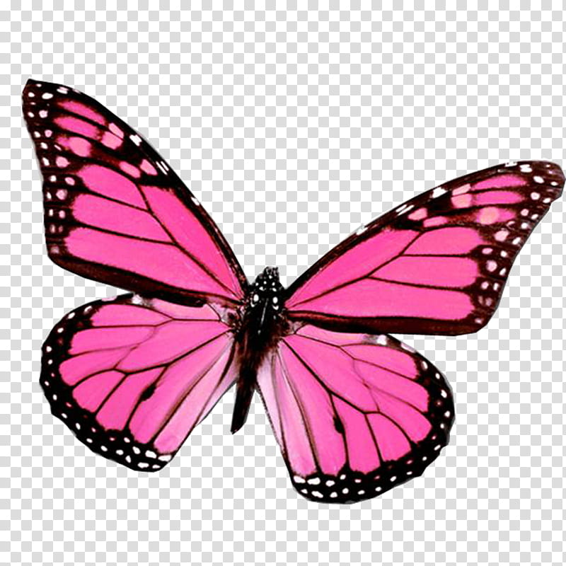 Mariposas, pink and black butterfly transparent background.