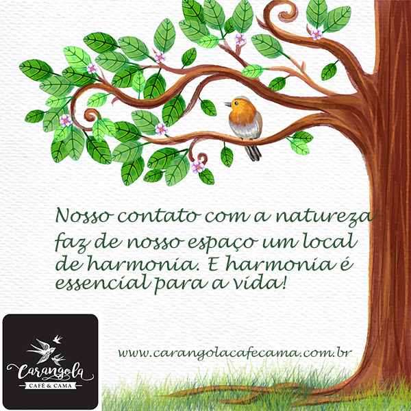 Michael. A maritaca reintegrada à natureza no Carangola Café e.